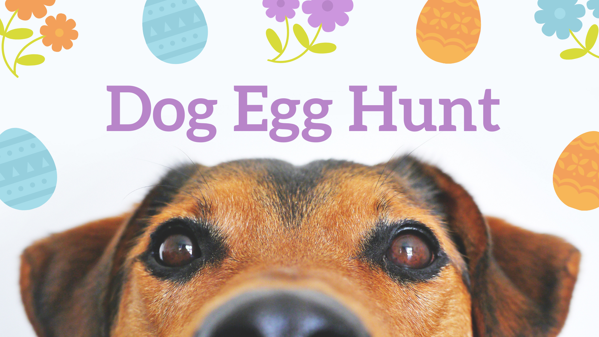 Dog Egg Hunt